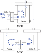 Biohydrogen from a Coupled Microbial Fuel Cell and Microbial