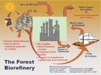 Forestbiorefinery