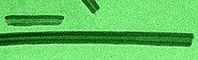 Nanotubes_nr